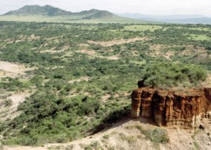 Olduvai Gorge--where so much of our knowledge of Man's evolution derives