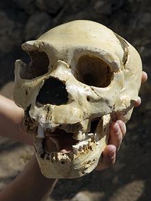 Skull_1430214f