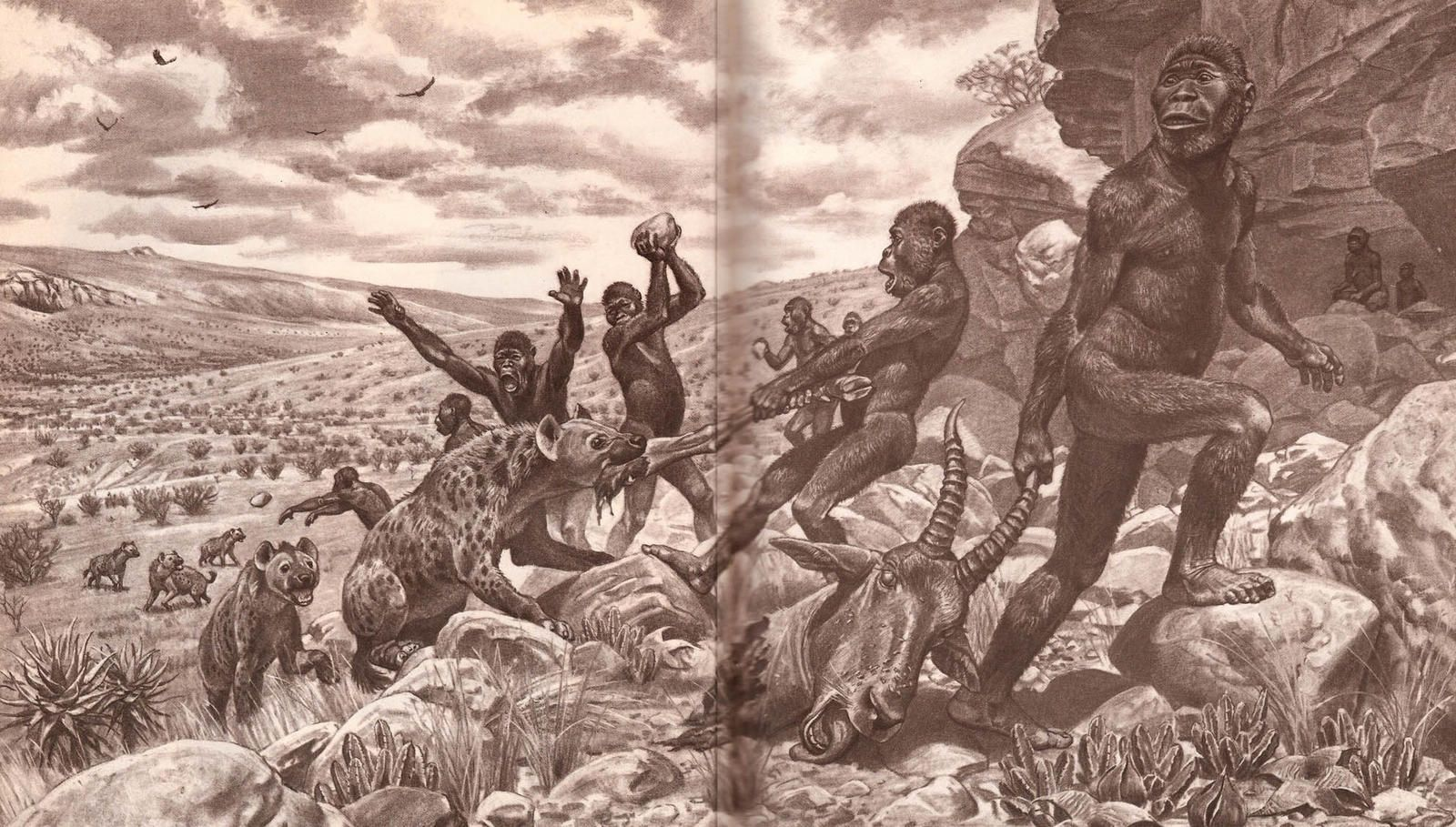 Image result for hominids fight