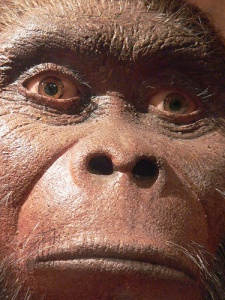 An in depth overview of mans ancestor homo habilis
